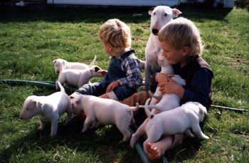 Lilli with Aidan and Evan and her first litter 1989